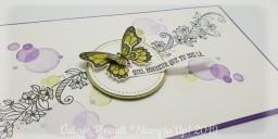Gala de papillons : le retour